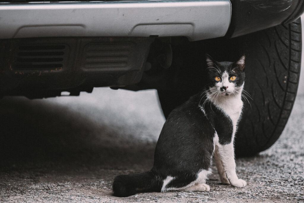 <h1>9:26:03 am</h1><br> Cat whisperer